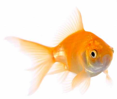VEN-virtual-enterprise-network-business-opportunities-small-fish_id799929_size485.jpg