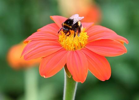 Beautiful Honey flowers