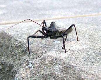black_bug.jpg